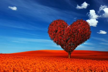 Photo for Heart shape tree with red leaves on red flower field. Love symbol, concept for Valentine's Day, wedding etc. - Royalty Free Image