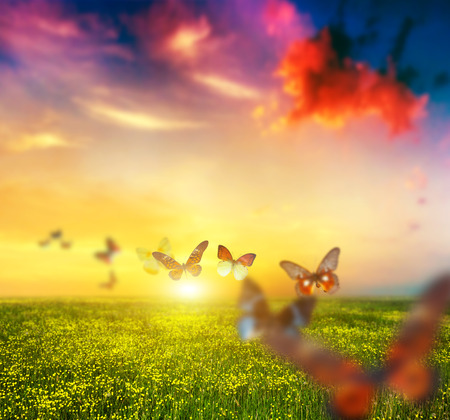 Photo pour Colorful butterflies flying over spring meadow with flowers.  - image libre de droit