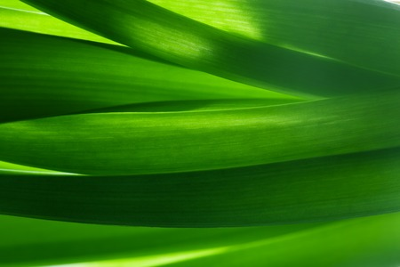 Green grass, plants background in backlight. Fresh, nature, nature composition.