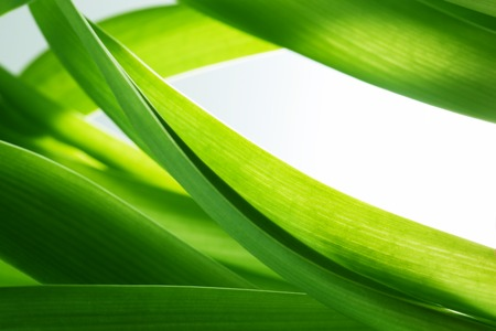 Photo for Green grass, plants background with white copy-space. Fresh, nature, nature composition. - Royalty Free Image