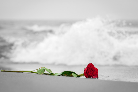Photo pour Waves washing away a red rose from the beach. Concept of romantic love, romance, but may also symbolize a loss, melancholy, memory of the past etc. Color against black and white - image libre de droit