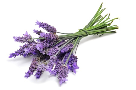 a bunch of lavender flowers on a white background