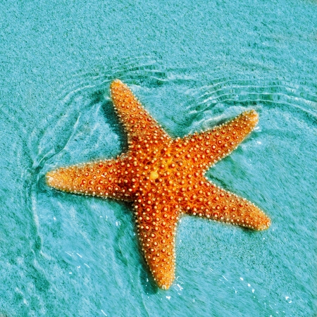 closeup of a seastar in a tropical beach
