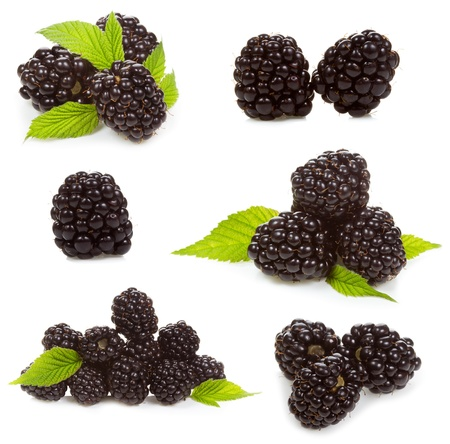 set with  blackberries on a white background