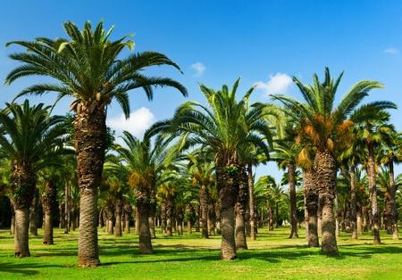 Palm Tree Grove