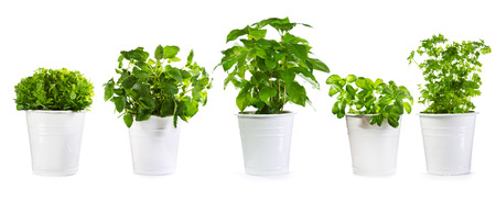 set of potted green plants isolated on white