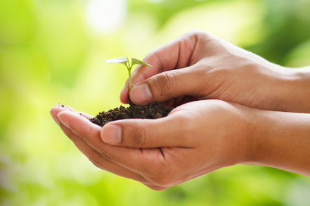 Photo pour Small plant growth on soild on hand with green nature background - image libre de droit