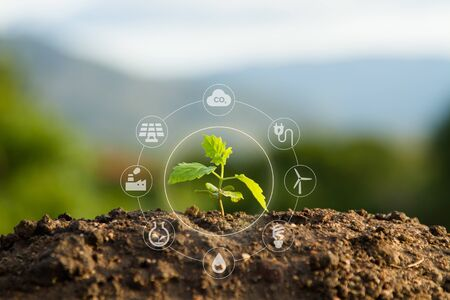 Photo pour seedling and sustainable icon - image libre de droit