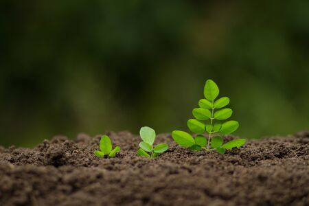 Foto de Growing vegetable and Business concept. - Imagen libre de derechos