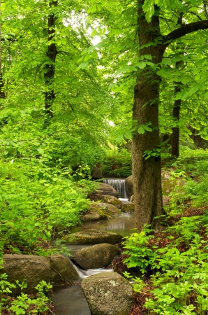 Photo for Beautiful forest landscape with small brook - Royalty Free Image
