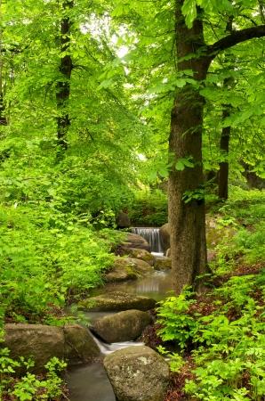 Foto de Beautiful forest landscape with small brook - Imagen libre de derechos