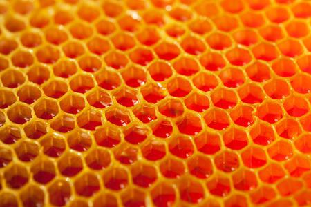 Fresh organic honey in comb
