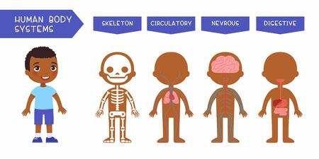 Illustration pour Human body systems educational kids banner flat vector template. Illustrated cute anatomy, internal organs structure for children. Cartoon skeleton, circulatory, nervous, digestive systems - image libre de droit