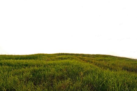 Foto de Meadow grass on isolate background - Imagen libre de derechos