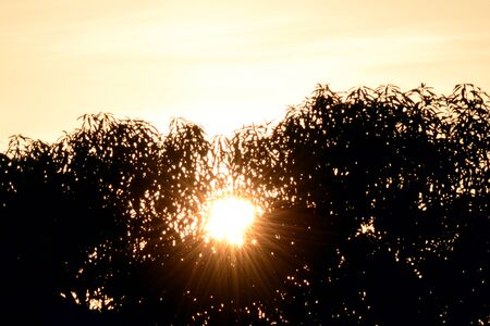 Photo for Sun through the trees. - Royalty Free Image