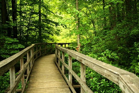 a Wooden bridge through the forest