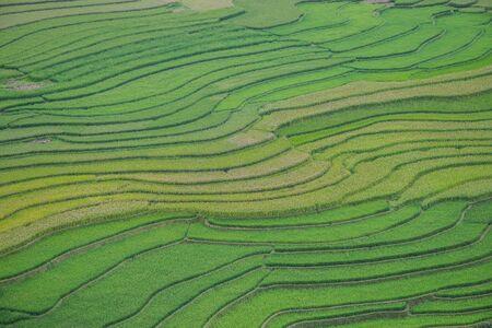 Rice fields on terraced of Mu Cang Chai, YenBai, Vietnam. Rice fields prepare the harvest at Northwest Vietnam. Mu Chang Chai is near Sapa.
