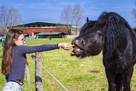 Photo pour A horse eats from a girl's hand,,girl feeding horses in the farm in summer day.Young girl feeds her horse out of her hand. - image libre de droit