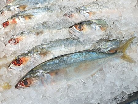 Photo pour Fresh mackerel fish that are high in Omega 3.Fish on ice in supermarket. Is fish lives in sea and popular to cook because it is inexpensive and tasty - image libre de droit