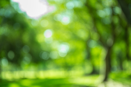 Blurred forest background, natural bokeh