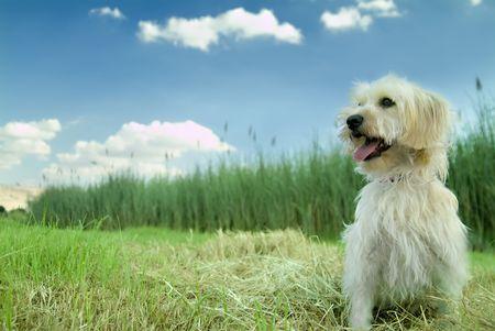 Domestic dog enjoying nature