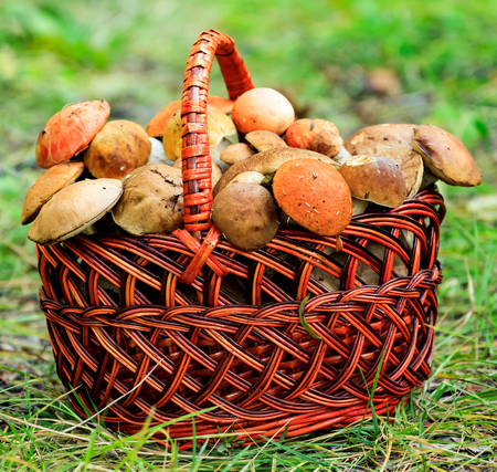 Closeup shot of a big basket full of mushroomsの写真素材