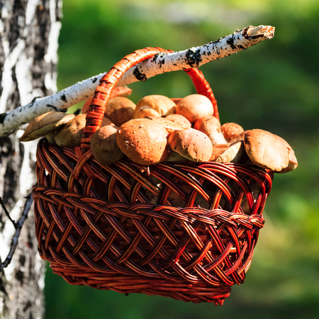 Shot of a big basket full of mushroomsの写真素材