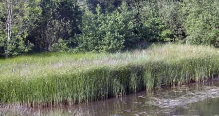 Photo pour part of a rice field in the estuary of Villaviciosa Asturias Spain - image libre de droit