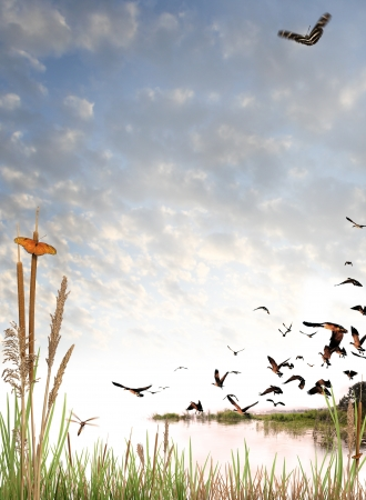 Wilderness elements composited on a light cloud background. Includes butterflies, a dragonfly, and flock of canadian geese