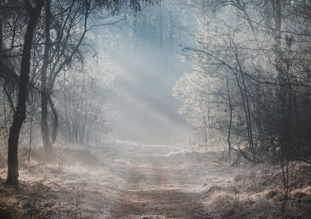 Photo pour Beautiful sunlit forest trail on a misty morning with sun rays lighting up the forest floor - image libre de droit