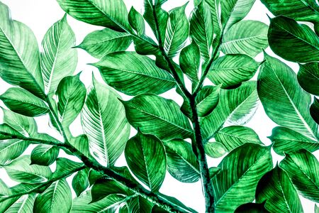 Photo for Green leaves pattern background, Natural background - Royalty Free Image