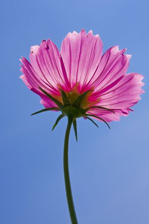 Flower&Sky