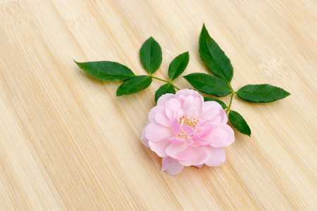 The pink fairy rose flower with leaf on the bamboo wood.