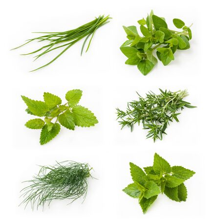 Collection of fresh herbs - chives, oregano, lemon balm, savory, dill, peppermint
