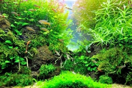Photo for Beautiful planted tropical aquarium with fishes - Royalty Free Image