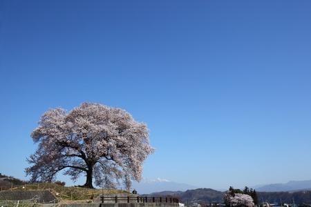 Norikazu110600071