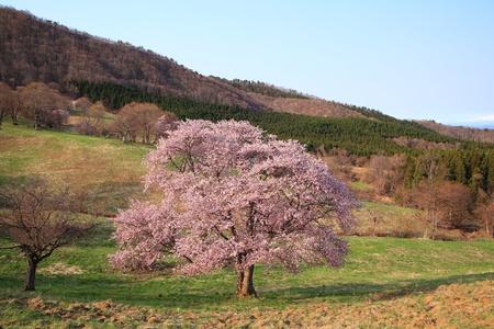 Norikazu130900037