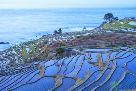 Rice terraces at twilight, Shiroyone senmaida, Ishikawa,Japan