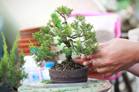 Photo for Bonsai pruning Handmade accessories wire and scissor bonsai tools. - Royalty Free Image