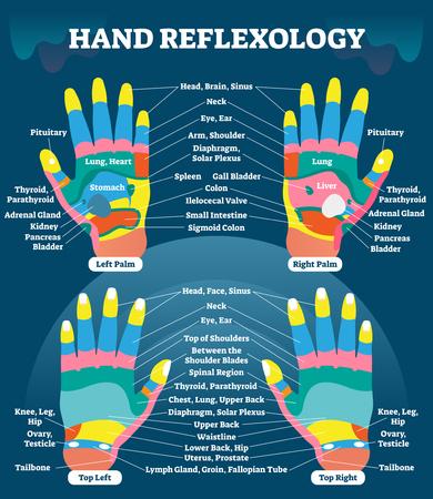 Hand reflexology information scheme.