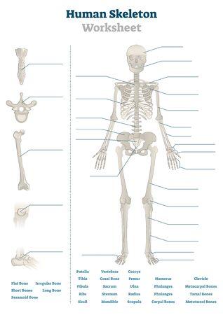Illustration pour Human skeleton worksheet vector illustration. Blank educational bones scheme. Inner skeletal system practice lessons task template. Workbook topic material for school teachers anatomy or biology tests - image libre de droit