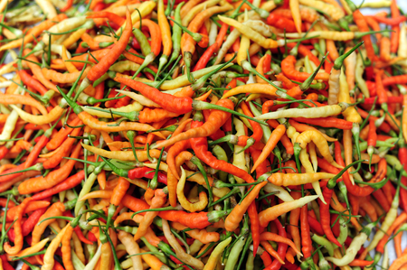 Chili Pepper variety color