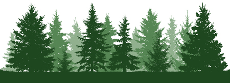 Illustration pour Forest fir trees silhouette. Coniferous green spruce. Christmas tree. Vector illustration on white background - image libre de droit
