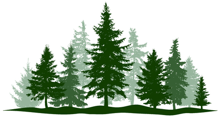 Illustration pour Green forest evergreen pine, tree isolated. Park Christmas tree. Individual, separate objects. Vector illustration - image libre de droit