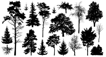 Illustration pour Set of a variety of forest trees. Isolated on white background. Collection of silhouette vector illustration - image libre de droit