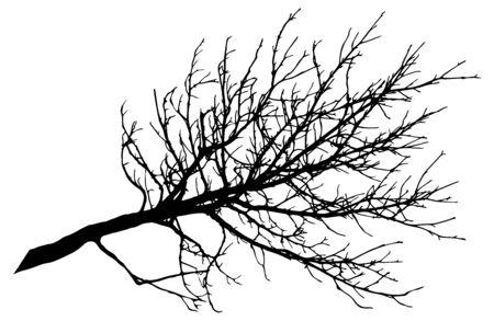 Illustration pour Beautiful big bare branch of tree, silhouette. Vector illustration. - image libre de droit
