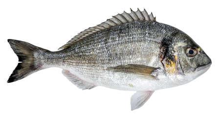 Photo pour Fresh fish dorado isolated on white background - image libre de droit