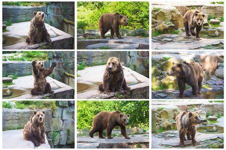 Photo pour Set of brown bears. Collage bear. - image libre de droit