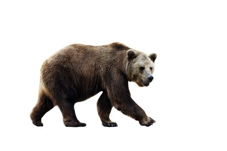 Photo pour Big brown bear isolated on white background. - image libre de droit
