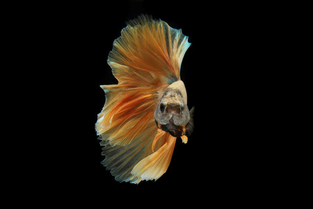 Movement the tail of 
